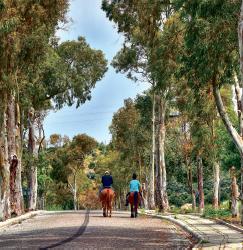 Paseo a caballo en Patara