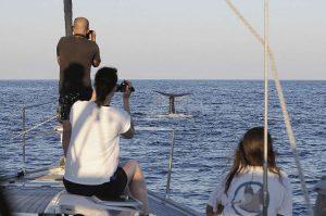 Inmortalizando un avistamiento de un cetáceo.